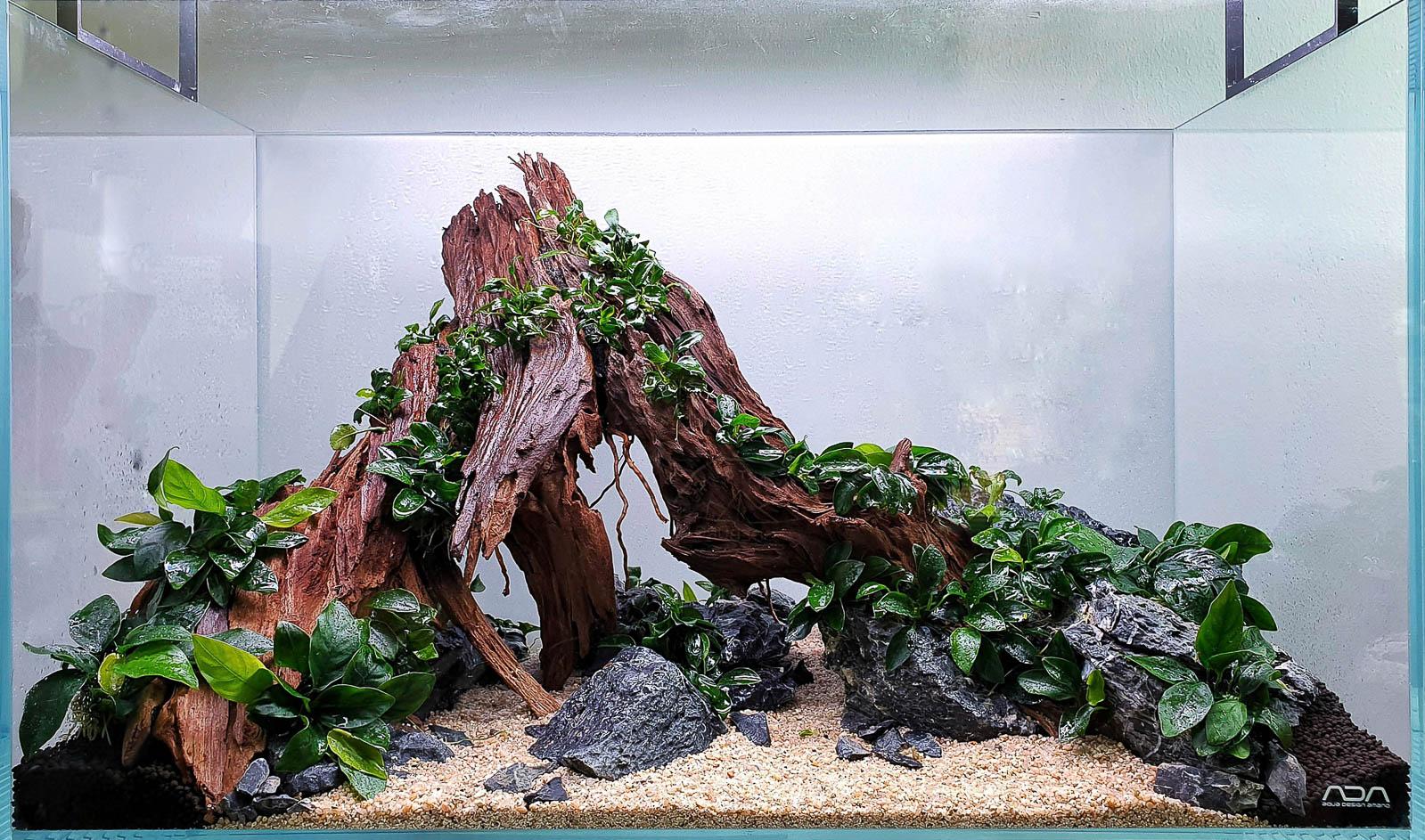 Yati Holz Aquascape firsch bepflanzt