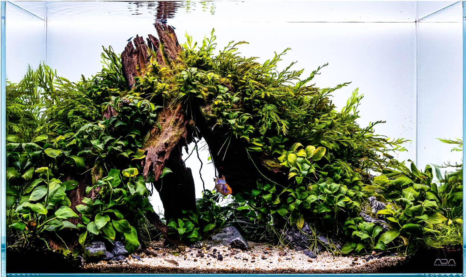 Yati Holz Final Shot Aquascape