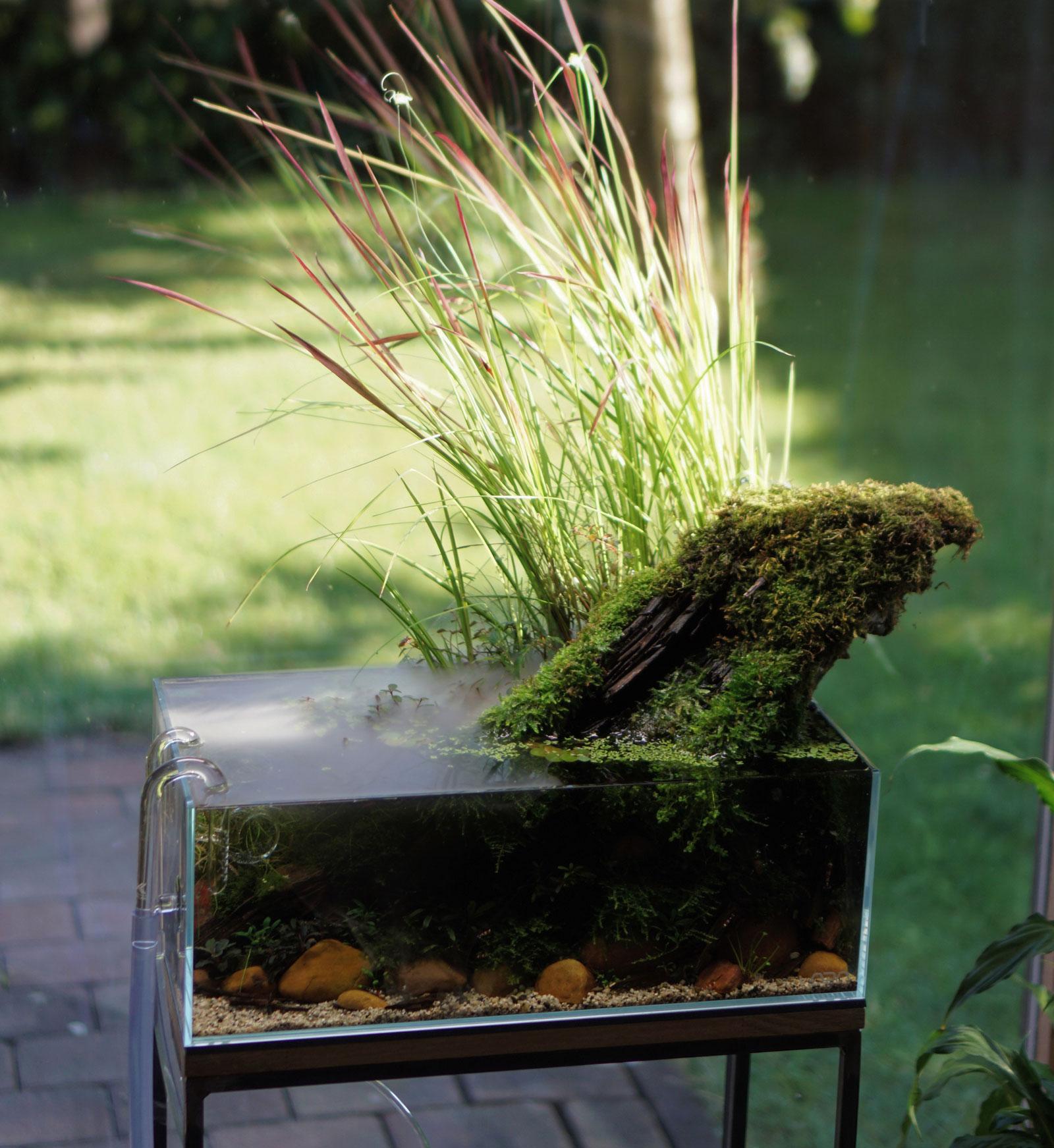 Pondstyle Aquascape mit Teichpflanzen