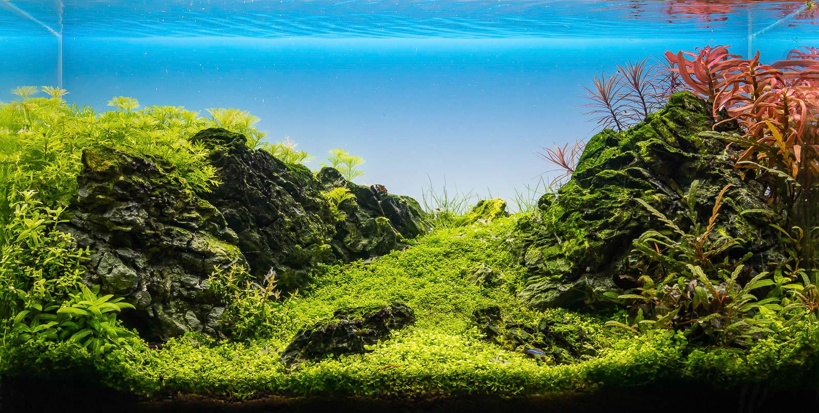 Aquarium mit Soil Bodengrund