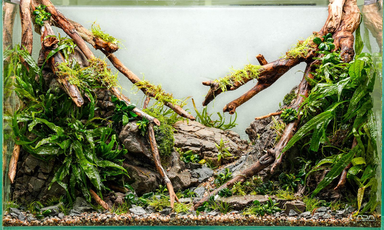 Talawa Wood Biotope Aquascape - Talawa Holz Biotop Aquascape