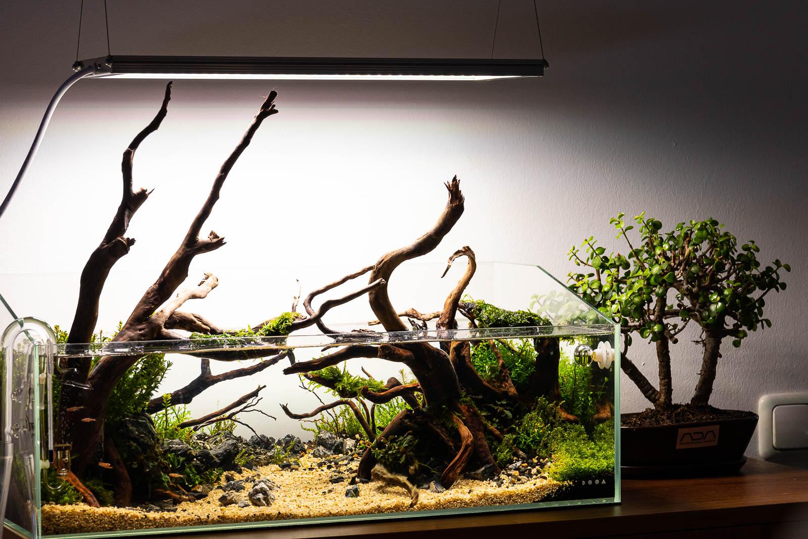 Moorkienwurzeln in einem Diorama