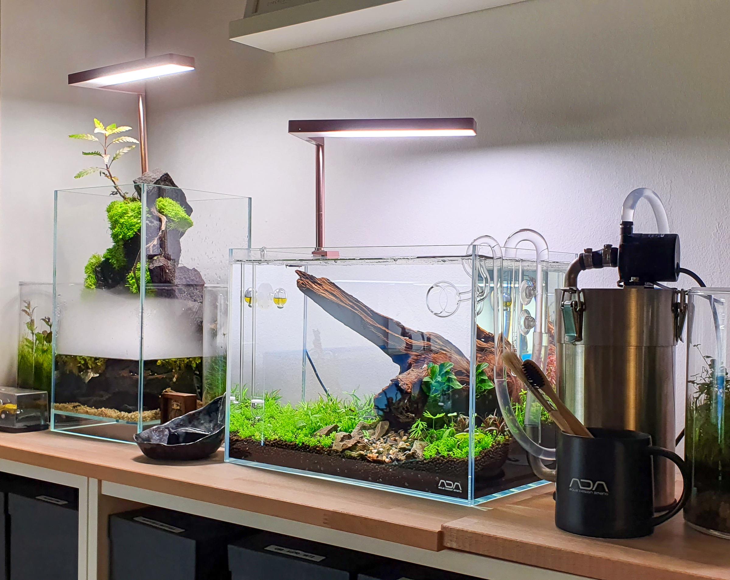 Kleines Aquarium, großer Filter